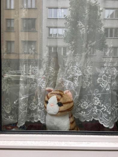 A ''cat'' on a window sill/©dariasdiaries