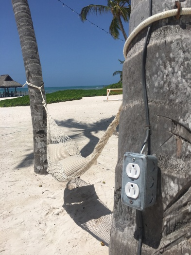 Palm trees with sockets/©dariasdiaries